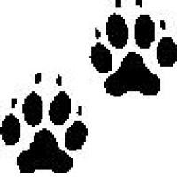 Sarah Matthews Dog Behaviour & Training, Hampshire - Image 1