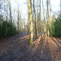Hay Wood dog walk, Warwickshire - Dog walks in Warwickshire