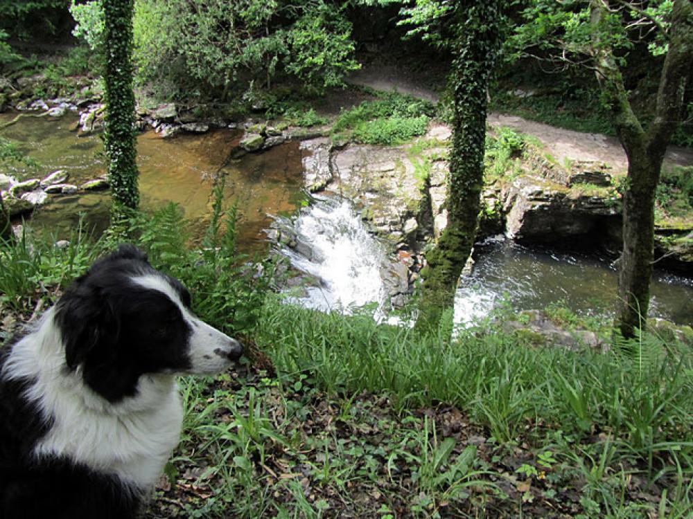 Lyn Valley dog walk, North Devon - Dog walks in Devon