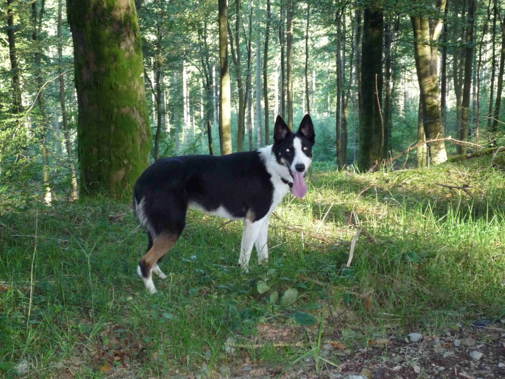 Gilston dog walk in the Scottish borders, Scotland - Dog walks in Scotland