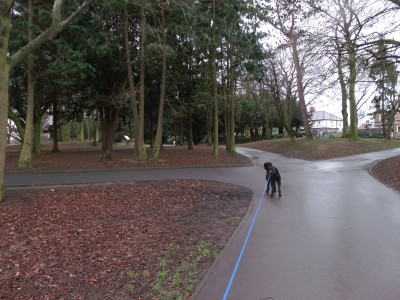Ropner Park, Stockton, County Durham - Driving with Dogs