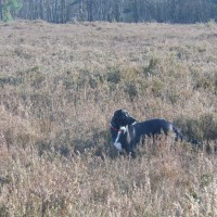Little Budworth Country Park dog walk, Cheshire - Dog walks in Cheshire