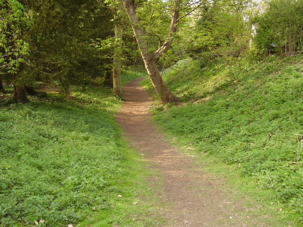 Magog Downs dog walk, Cambridgeshire - Dog walks in Cambridgeshire