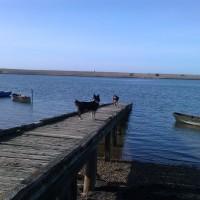 The Fleet dog walk near Weymouth, Dorset - Dog walks in Dorset