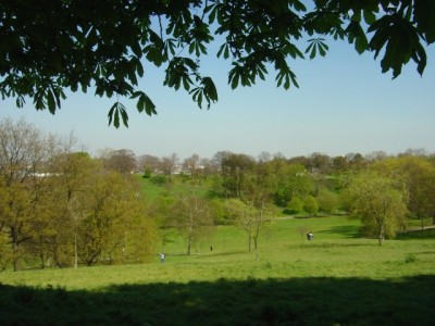 Greenwich Park local dog walk, Greater London - Driving with Dogs
