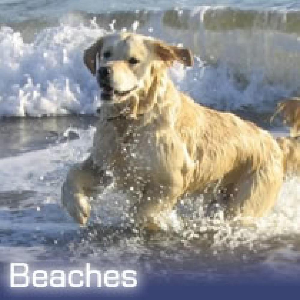 Abrahams Hole dog-friendly beach, Devon - Dog walks in Devon
