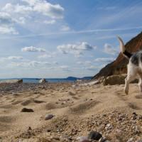 Branscombe dog-friendly beach and dog walk, Devon - Dog walks in Devon