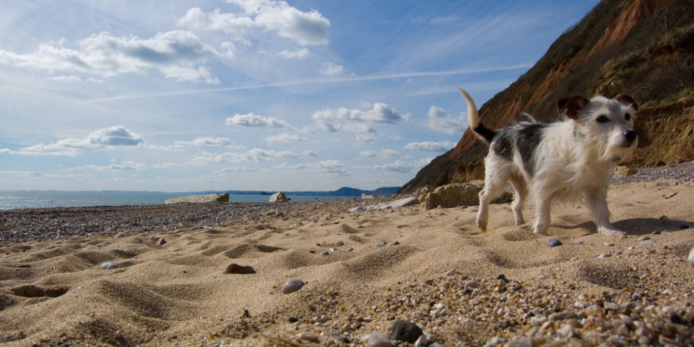 Branscombe dog-friendly beach and dog walk, Devon - Dog walks in Devon