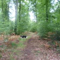 National forest dog walk near Bazouges, France - Image 1