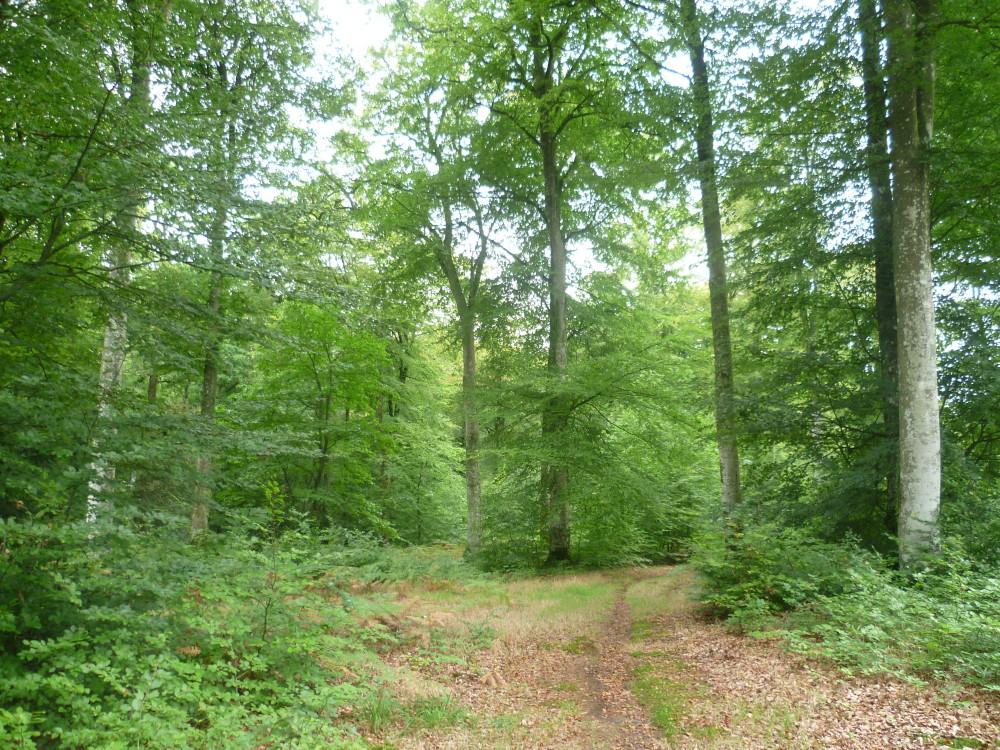 National forest dog walk near Bazouges, France - Image 2