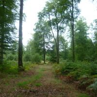 National forest dog walk near Bazouges, France - Image 3