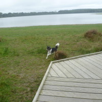 Dog walk in France near Feins, France - Image 1