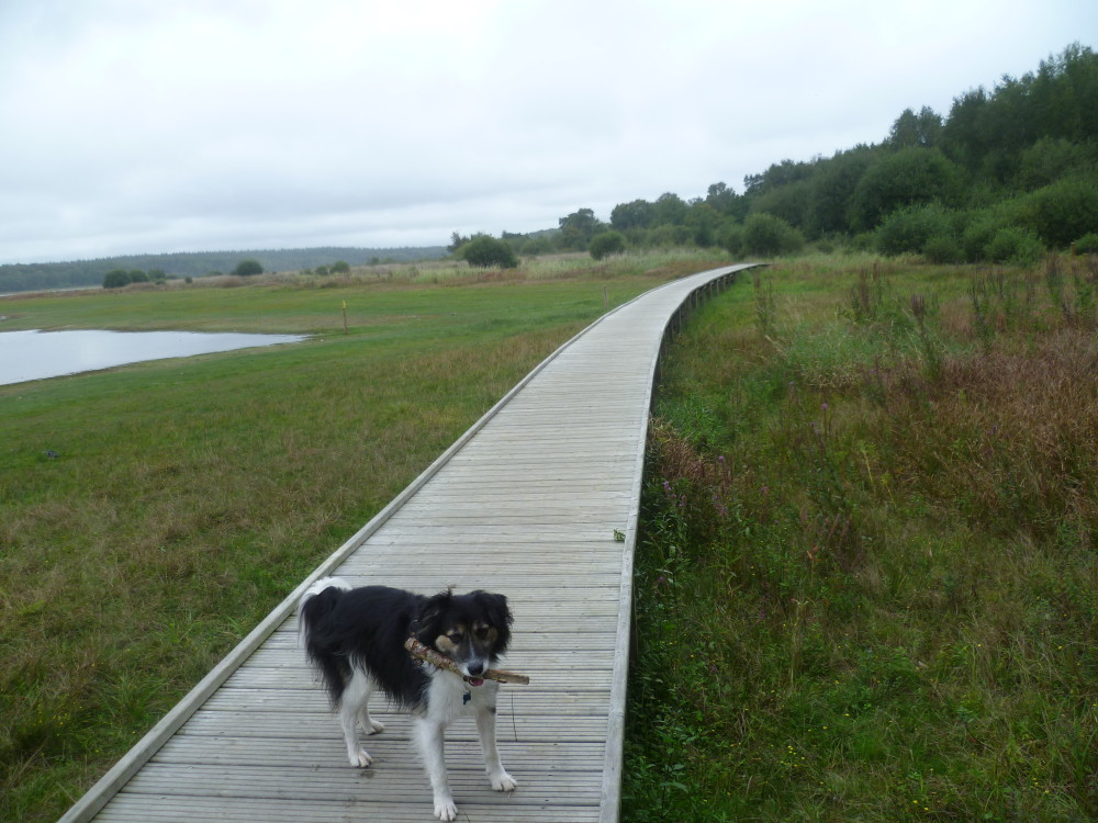 Dog walk in France near Feins, France - Image 3