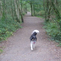 Dog walk in France near Feins, France - Image 4
