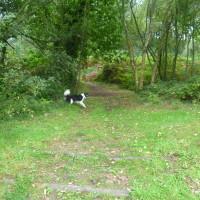 Mont Castre dog walk, Cherbourg Peninsula, France - Image 2