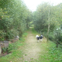 Mont Castre dog walk, Cherbourg Peninsula, France - Image 4