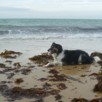 Cap de Carteret dog walk, Cherbourg Peninsula, France - Image 3