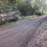 A246 accessible dog walk in Effingham Forest, Surrey - Surrey dog-friendly pub with dog walk.JPG