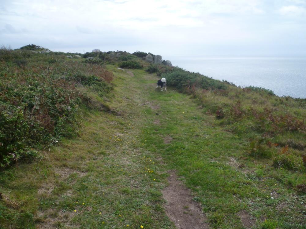 Cap de Flamanville coastal dog walk, France - Image 1