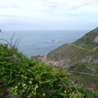 Cap de Flamanville coastal dog walk, France - Image 2