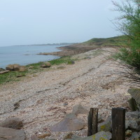 Cap Levi dog walk near Cherbourg, France - Image 2
