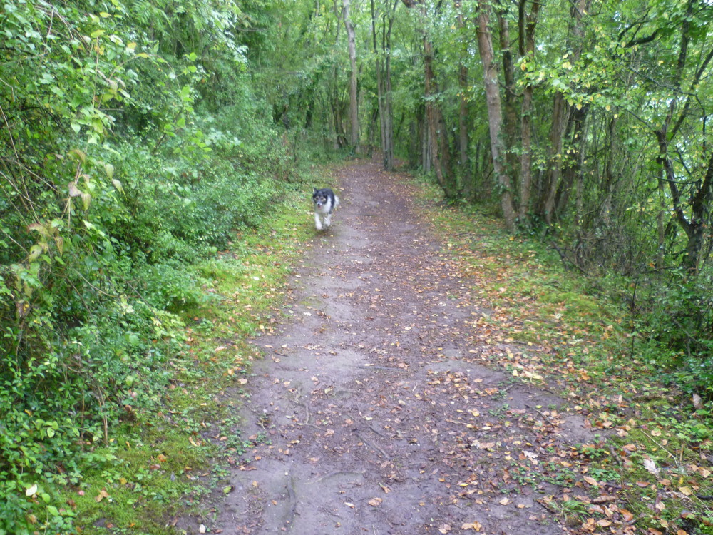 A dog walk in St Suliac, France - Image 3