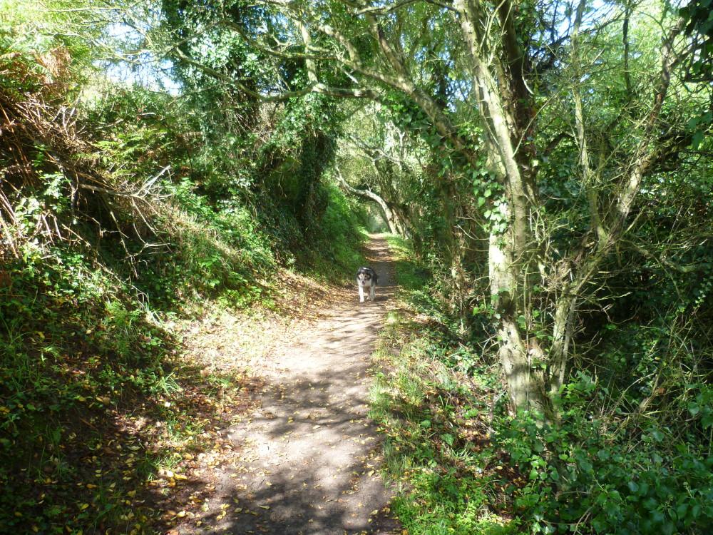 Cancale Coast Path walk with the dog, France - Image 3