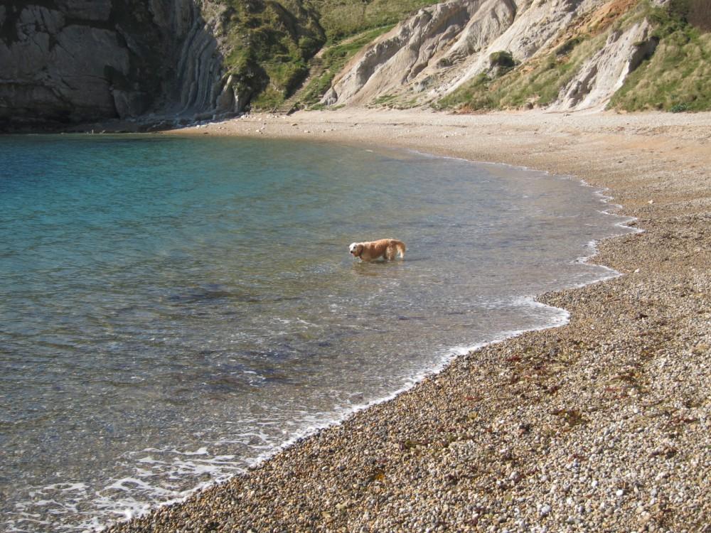 Durdle Door dog-friendly beach, Dorset - Dorset dog-friendly beach