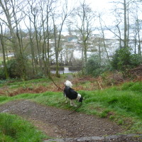 Loch Lomond dog walk at Balmaha, Scotland - Dog walks in Scotland