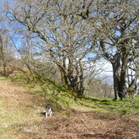 Glen Nant dog walk, Scotland - Dog walks in Scotland