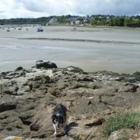 Guildo's Castle dog walk and ruins, France - Image 1