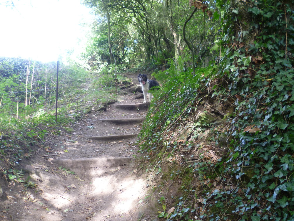 Guildo's Castle dog walk and ruins, France - Image 4