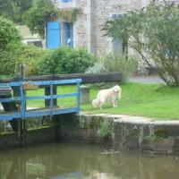 Canal d'Ille et Rance dog walk, France - Image 1