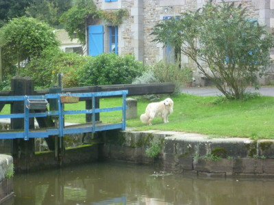Canal d'Ille et Rance dog walk, France - Driving with Dogs