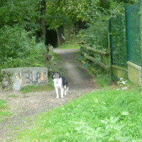 Canal d'Ille et Rance dog walk, France - Image 4