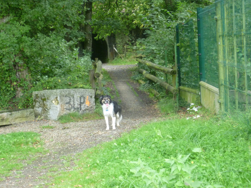 Canal d'Ille et Rance dog walk, France - Image 4