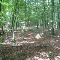 Bagnoles de l'Orne dog walk, France - Image 2