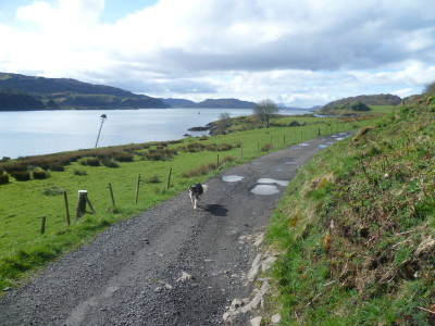 Isle of Kerrera dog walk, Scotland - Driving with Dogs