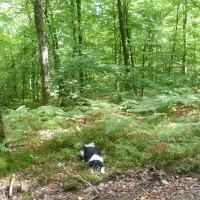 A28 exit 19 forest dog walk near Alencon, France - Image 1