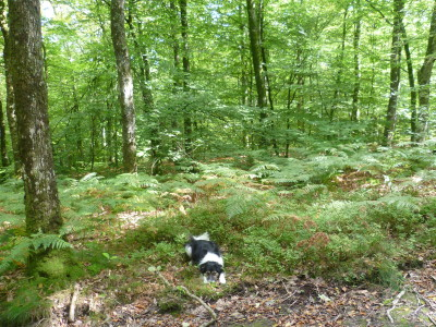 A28 exit 19 forest dog walk near Alencon, France - Driving with Dogs