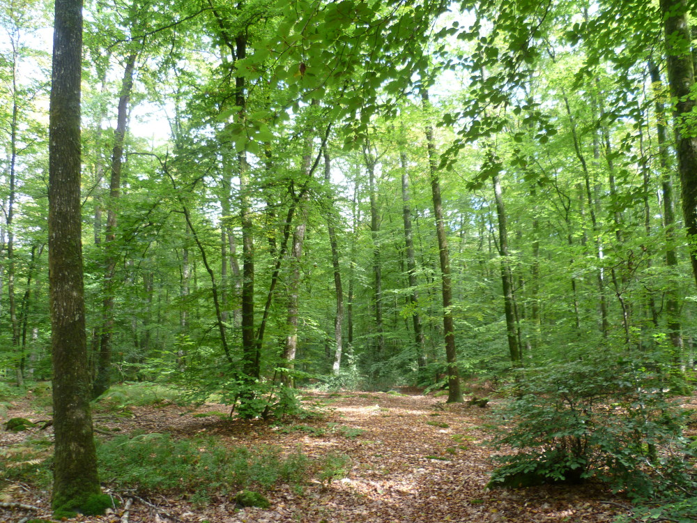 A28 exit 19 forest dog walk near Alencon, France - Image 2