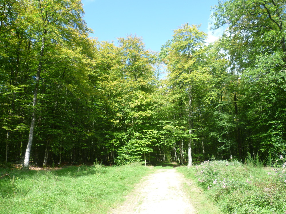 A28 exit 19 forest dog walk near Alencon, France - Image 3