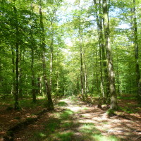A28 exit 19 forest dog walk near Alencon, France - Image 4