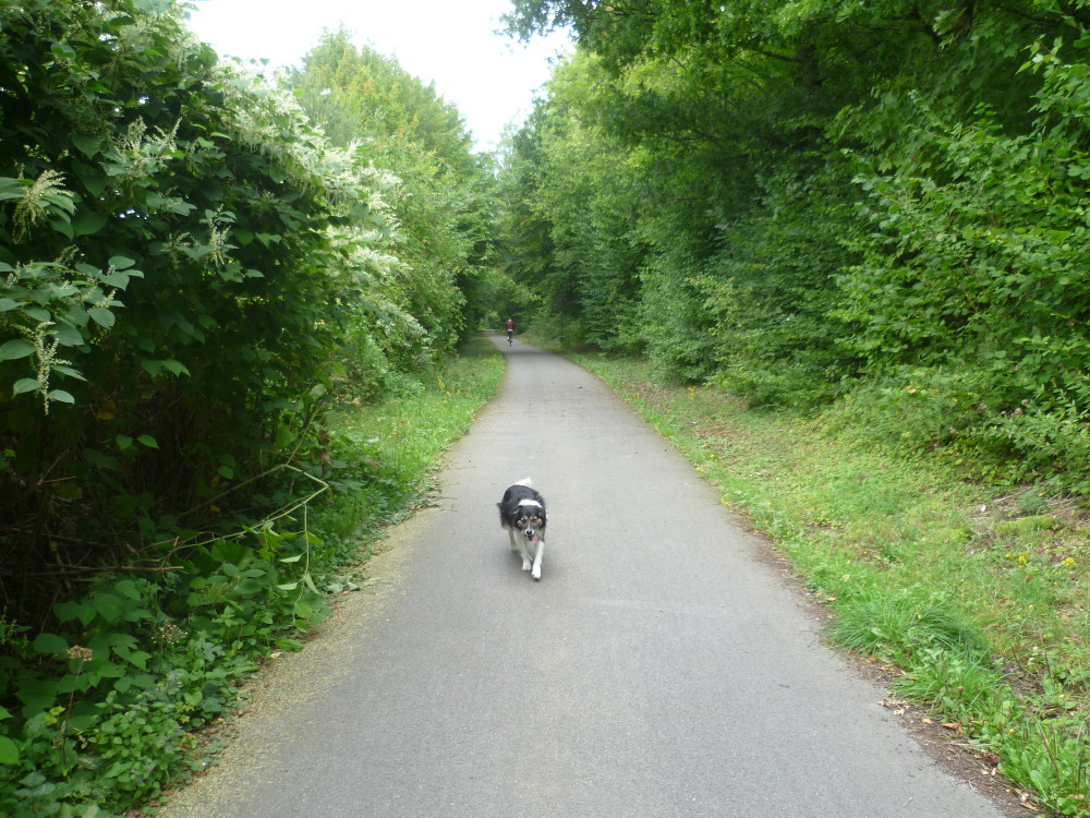 A28 exit 15 doggiestop in Broglie, France - Image 3