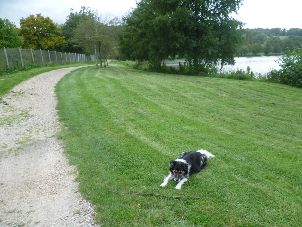 A28 exit 13 dog walk at Brionne, France - Image 3