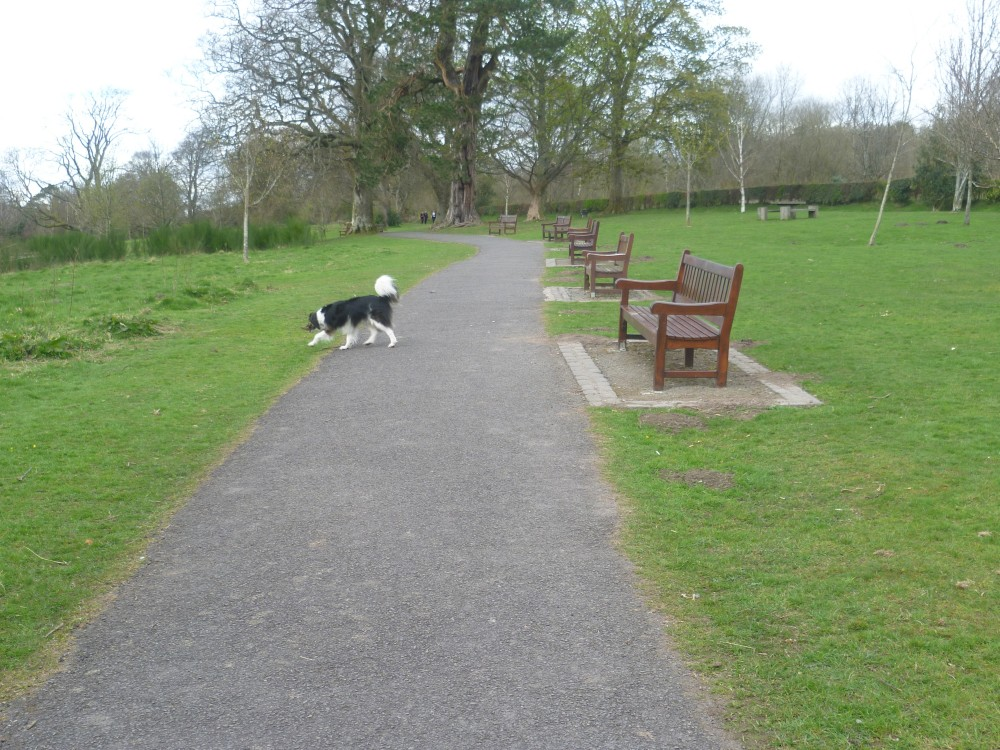 A82 dog walk near Dumbarton, Scotland - Dog walks in Scotland