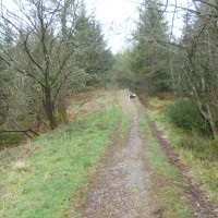 Forest dog walk near Loch Lomond, Scotland - Dog walks in Scotland