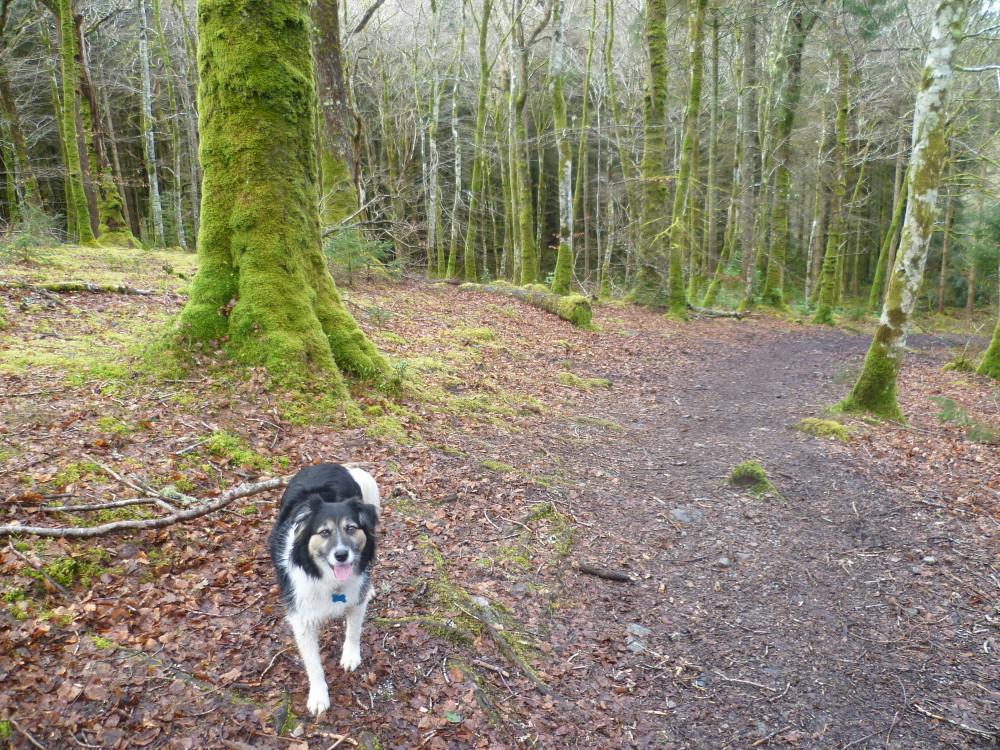 Woodland dog walk near Barcaldine, Scotland - Dog walks in Scotland
