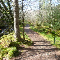 Woodland dog walk near Barcaldine, Scotland - Dog walks in Scotland