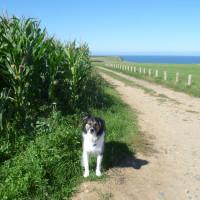 Dog walk near Arromanches, France - Image 3